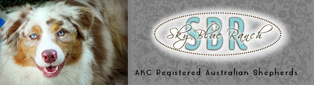 Australian Shepherd PuppiesForSale