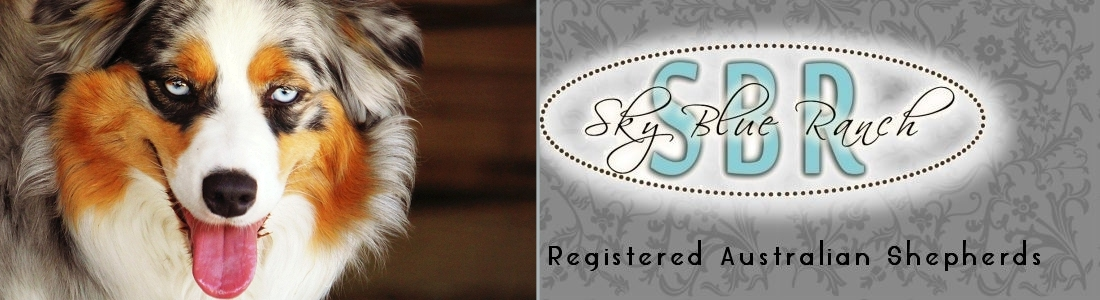 Australian Shepherd Puppies ForSale